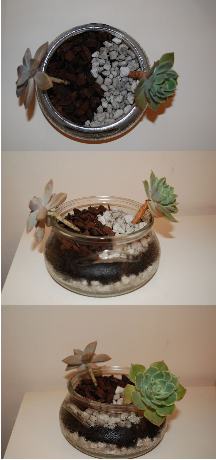 Take one jar. Some gravels to the bottom of the tin. Add compost. And of course 2 small succulents that you have. Add a little more compost. Decorate with little gravels. In my basket I decorated with white holystone and pine bark.