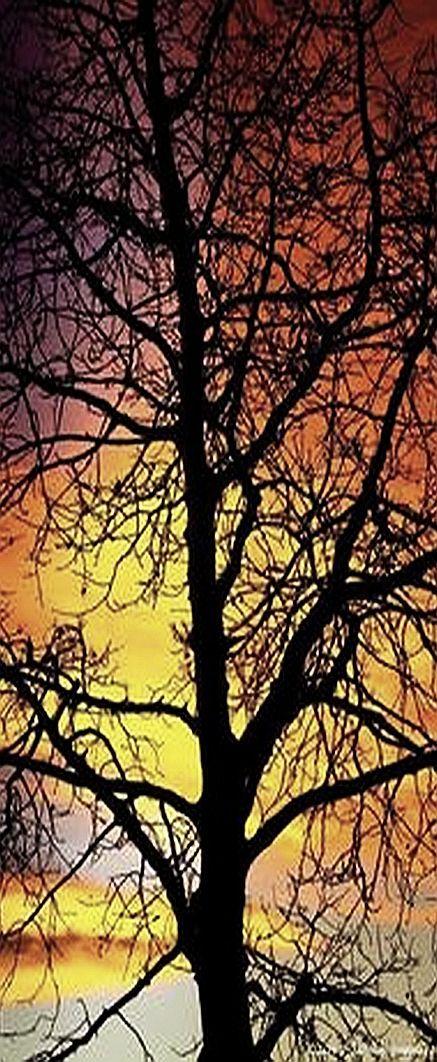 sunset tree silhouette  #via: loveandaquestion.tumblr.com
