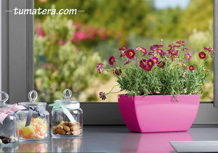 Jardinera con diseño rectangular de bordes redondeados. Encuentralas en: http://www.tumatera.co/products/mpa-301417evora/