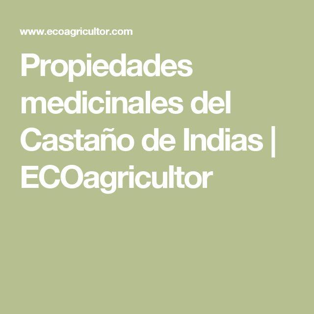 Propiedades medicinales del Castaño de Indias   ECOagricultor