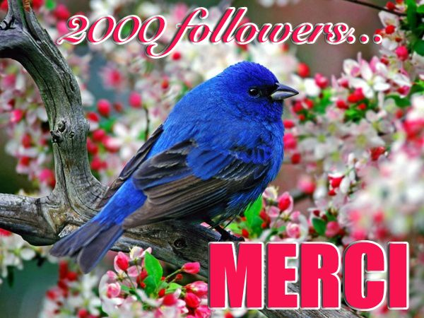 Cap des 2.000 followers passé mi-juin 2014
