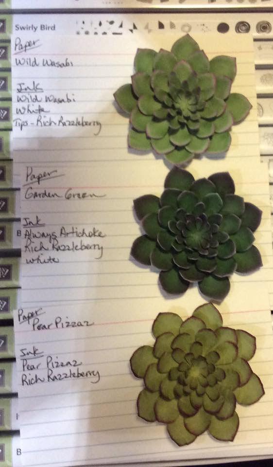 so succulent