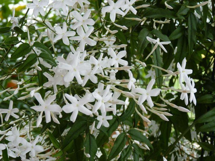58 best Pflanzen images on Pinterest Plants, Balcony and Cacti - tipps pflege pflanzen wintergarten