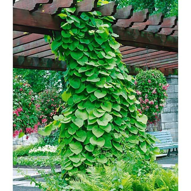 Best 80 Garten, Blumen und Co images on Pinterest Backyard patio - garten blumen gestaltung