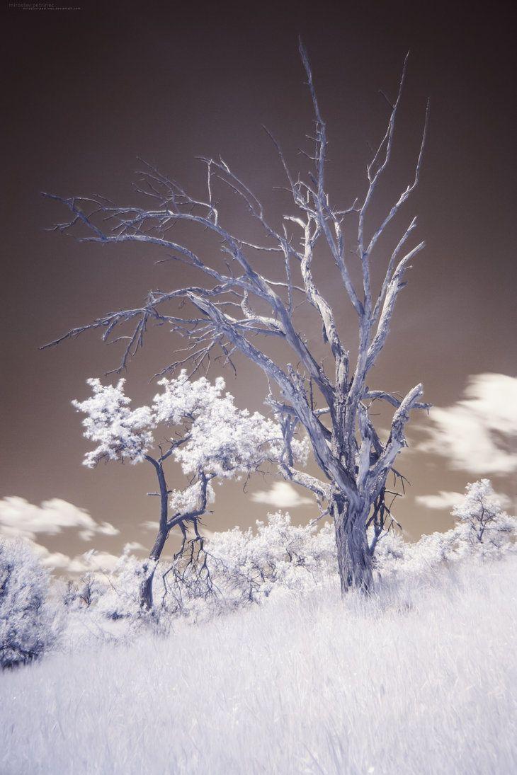 Dead Tree by miroslav-petrinec