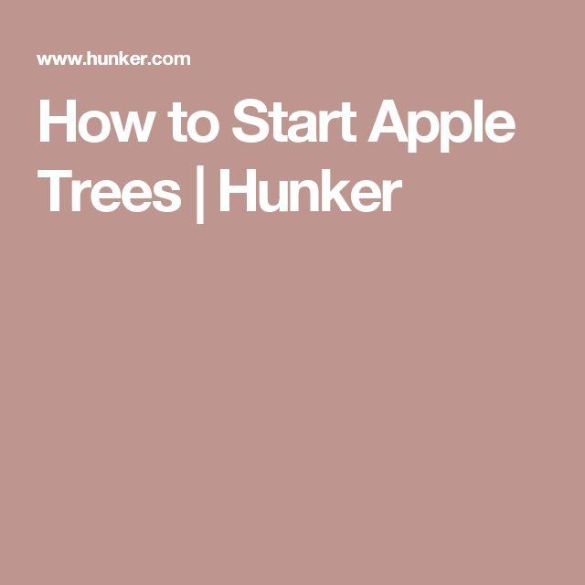 How to Start Apple Trees | Hunker