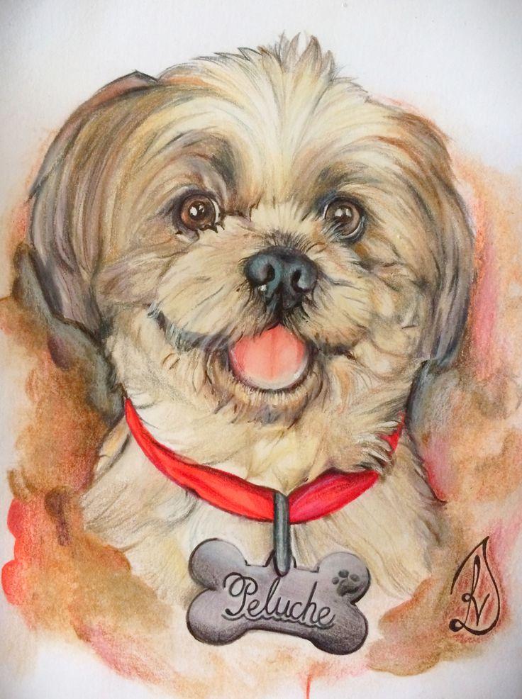 Love muy pet #acuarela #dog #shitzu