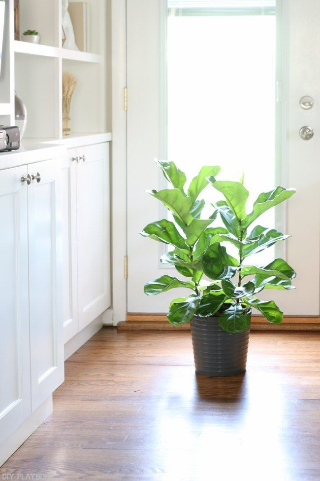 68 best (House) Plants images on Pinterest House plants, Indoor