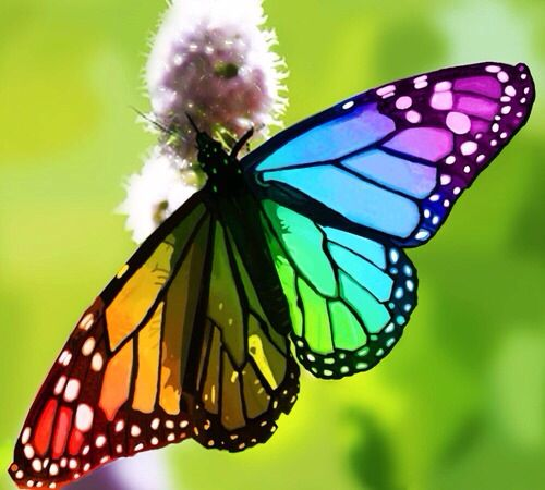 Rainbow Monarch Butterfly  With Images