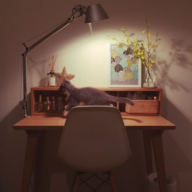 mangomilkさんの、机,無印良品,間接照明,猫,一人暮らし,北欧,ねこ,デスクライト,デスク,ねこのいる風景,ひとり暮らし,artemide,無印良品 壁に付けられる家具,のお部屋写真