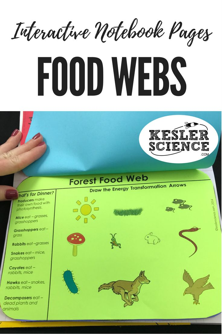 Examine saltwater, freshwater, and forest food webs. Identify energy transformations and human impact on ecosystems with this flip book worksheet activity. Turn science notebooks into a fun, interactive, hands-on learning experience for your upper elementary or middle school students! Grades 4th 5th 6th 7th 8th