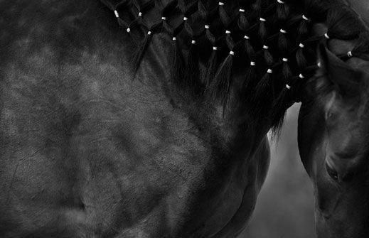 Svetlana Petrova: Black and White Reflections   La Cavalière masquée
