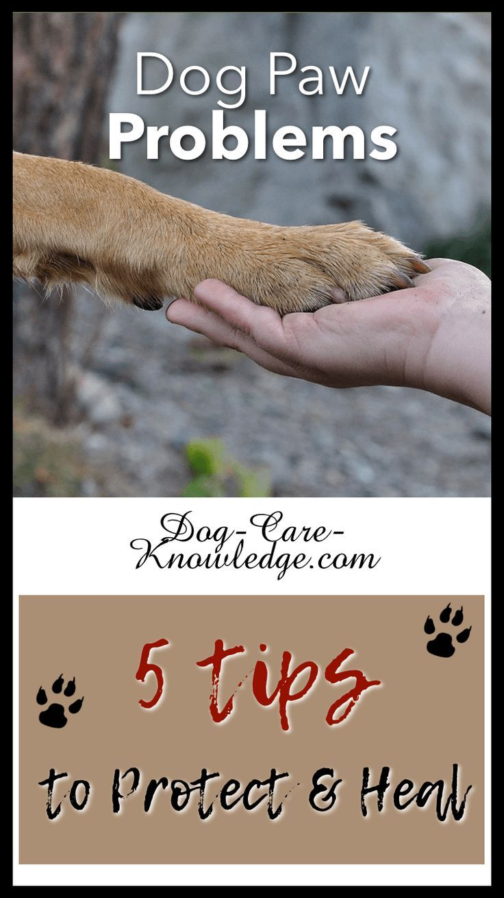 Dog Paw Problems 5 Amazing Tips On How To Protect Keep Paws Healthy Paw Care Dog Paw Care Dog Paw Pads
