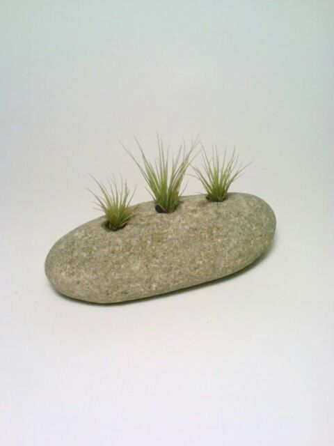 Air Plant Holder, Engraved Rock, Stone Paperweight,  Natural Tillandsia Holder, Eco Friendly. $25.00, via Etsy.