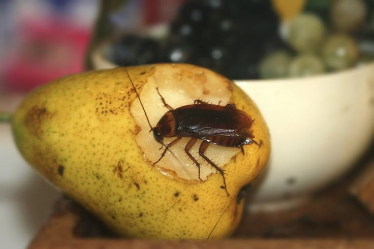"If you have a persistent cockroach problem or maybe a cockroach   infestation, you need to pull out the ""big guns"" and a cockroach ""bomb"" is   just the ticket!    Insecticide ""bombs"" or ""foggers"" are technically known as ""total release   aerosols"" – once you press the button, there's no stopping the"