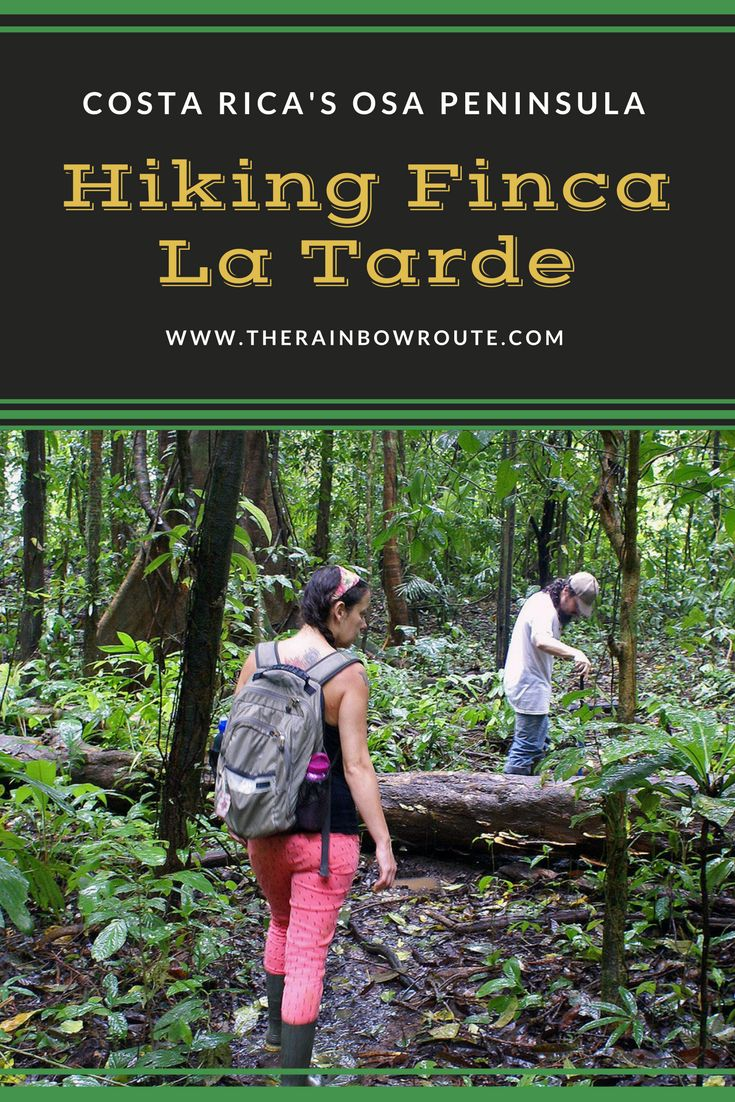 Finca La Tarde sits just outside Corcovado National Park and offers hikers the opportunity to get close to all the beautiful nature Costa Rica has to offer. #costarica #hiking #travel