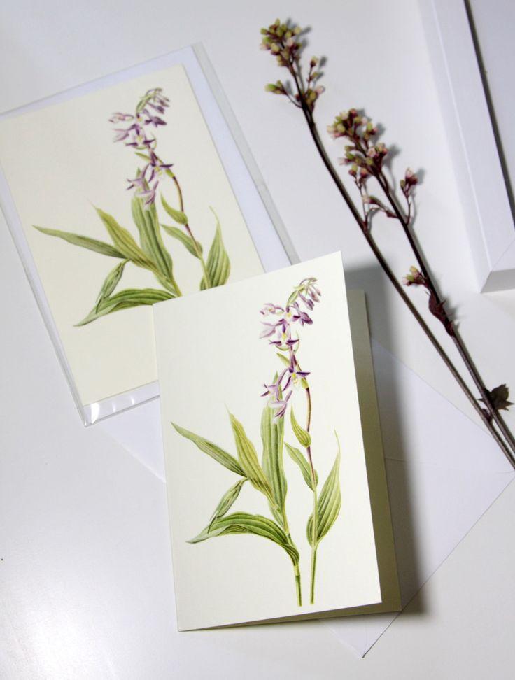 Botanical greeting card Wildflower Blank greeting card