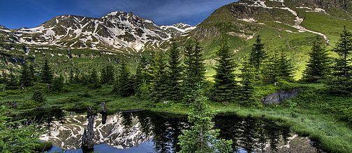 Alpine primeval forest at Rauris - Salzburg