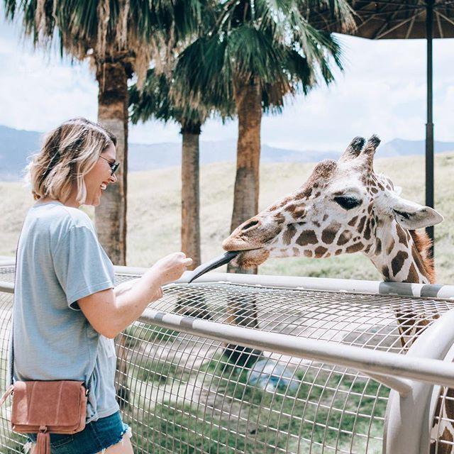 Feeding giraffes at The Living Desert Zoo in Palm Springs