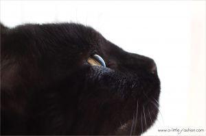 Sommer, Sonne, Fellwechsel – Katzenhaare entfernen leicht gemacht