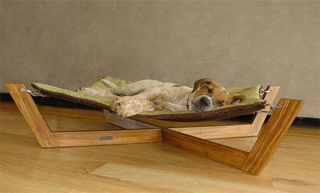 Stylish sleeping arrangements for dogs