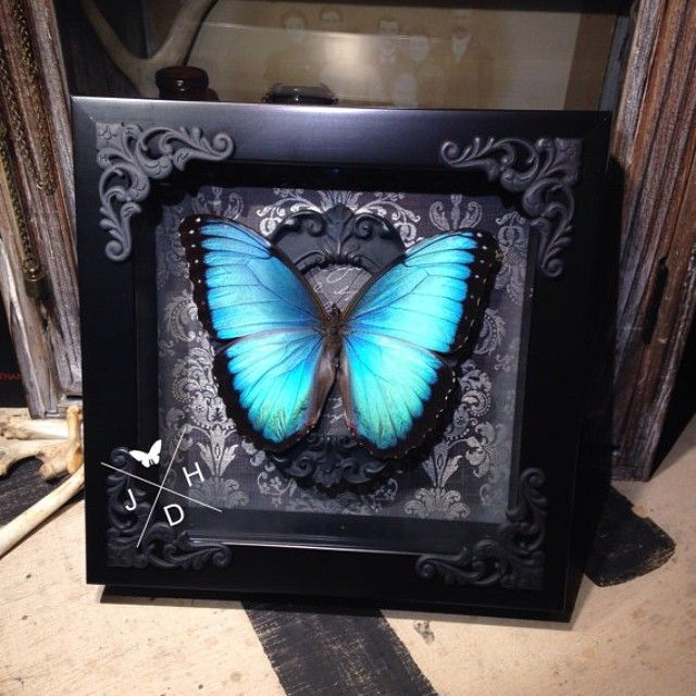 1000 ideas about butterfly wall decor on pinterest Oddities home decor