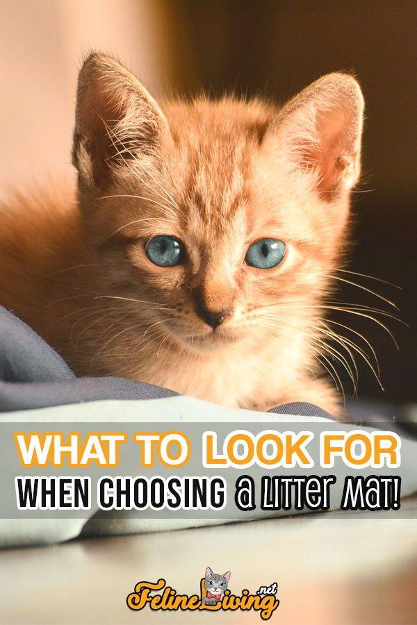 Felineliving Net Best Cat Litter Cat Litter Mat Kittens Cutest