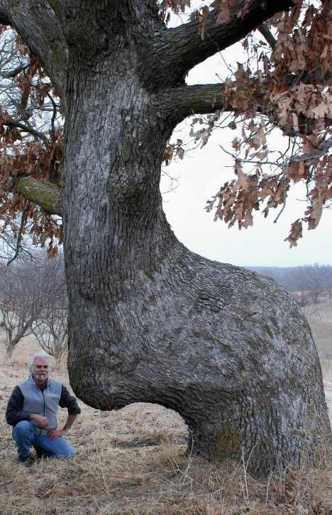 Native American Trail Marker Trees: Signs of another time... WebEcoist