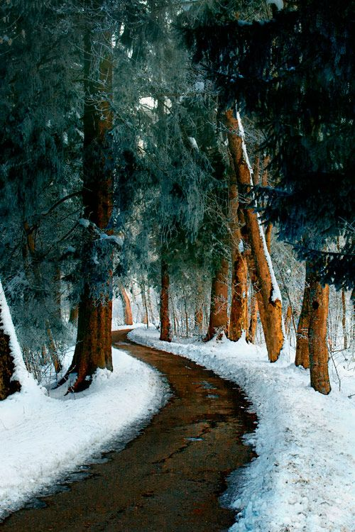 "wakeourworld: ""letsjorgepartida: "" earthyday: "" The path is cleared © Gabriele Wahl "" By Gabriela Wahl """