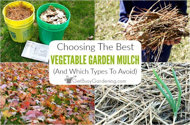 Choosing The Best Mulch For Vegetable Gardens Mulch For Vegetable Garden Vegetable Garden Garden Care