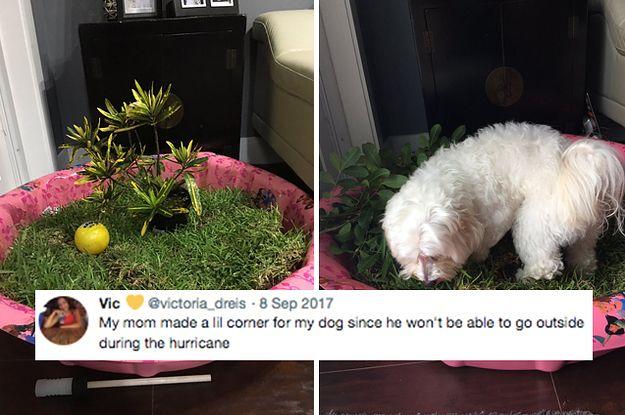 17 Dog Moms Who Set The Bar Extremely High Dog Mom Humor Dog Mom Dogs