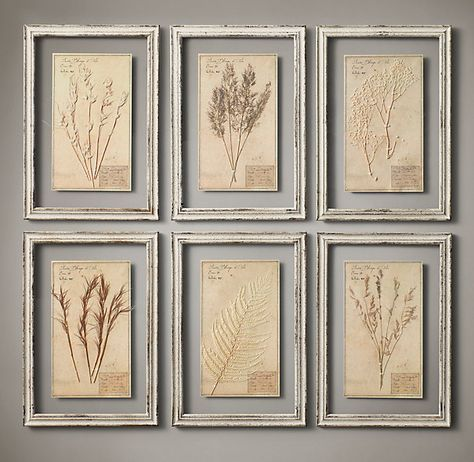 """Restoration Hardware - 19th C. Framed Herbariums Ivory (Set of 6) $595 Our framed herbarium boards – each one unique – display the organic beauty of genuine botanical specimens from the 19th century. Mounted on paper, each is labeled and framed between two panes of glass.     Herbarium, approx.:13½""""W x 19½""""H     Frame: 15¾""""W x 22¾""""H overall"""