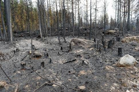 Djurens hemmiljö i skogen har förvandlats till aska. De stora djuren har flytt, mimdre djur har grävt ner sig.