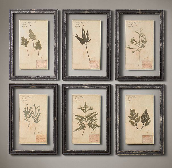 """Restoration Hardware - 19th C. Framed Herbariums Black (Set of 6) $595 Our framed herbarium boards – each one unique – display the organic beauty of genuine botanical specimens from the 19th century. Mounted on paper, each is labeled and framed between two panes of glass.     Herbarium, approx.:13½""""W x 19½""""H     Frame: 15¾""""W x 22¾""""H overall"""