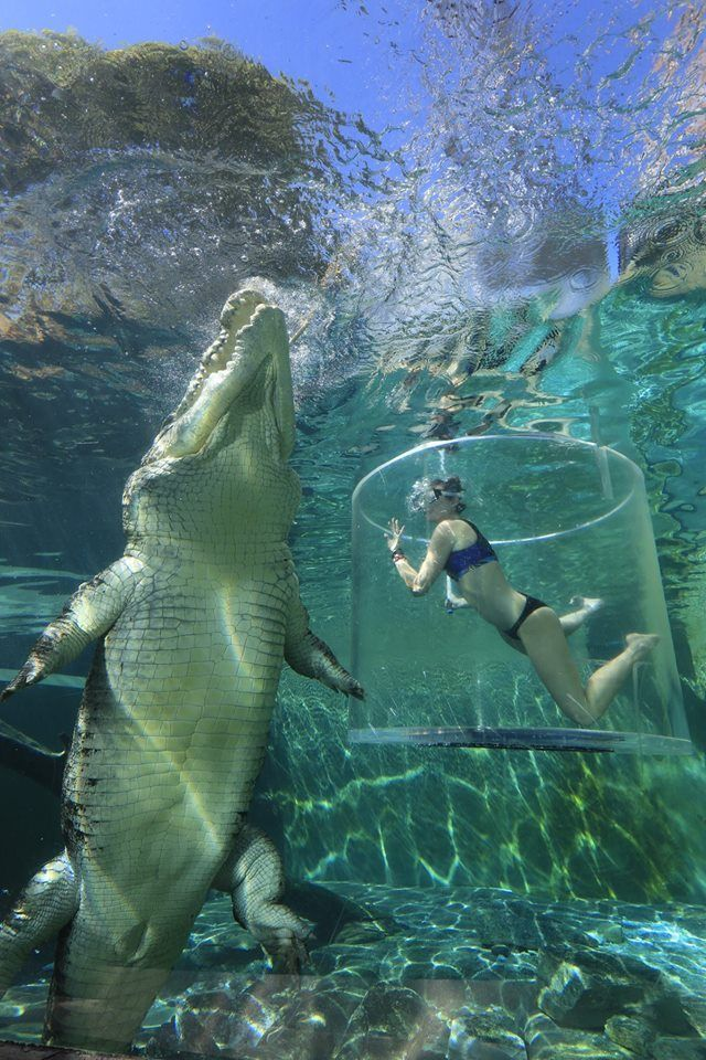 Australia.com The 'Cage of Death' at Crocosaurus Cove Darwin is a 15 minutes experience where you get up close and personal with one of these massive reptiles.