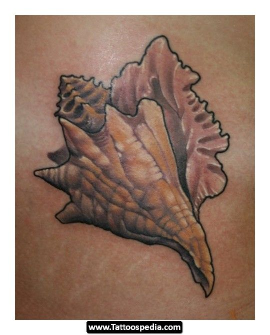 Conch Shell Tattoos 11 Conch Shell Tattoos 11