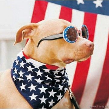 PR Interiors Glas Art Glazen Kader 40 glaspaneel Hond met zonnebril Amerikaanse vlag
