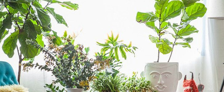 If your heart wants a fiddle leaf fig tree but your black thumb is standing in the way, San Francisco Bay Area editor and garden consultant Julie Chai can help! While she considers fiddle leaf fig trees to be reasonably low-maintenance, she insists on