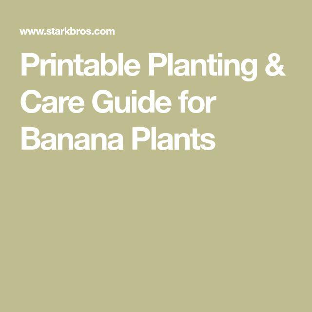 Printable Planting & Care Guide for Banana Plants