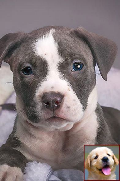 1 Have Dog Behavior Problems Learn About Dog Behavior Lexington
