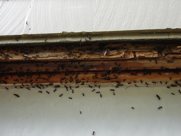 Ants can be everywhere in your home and can be a pest in