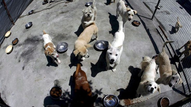 El negocio (y a veces maltrato) detrás de la acogida de perros y gatos abandonados