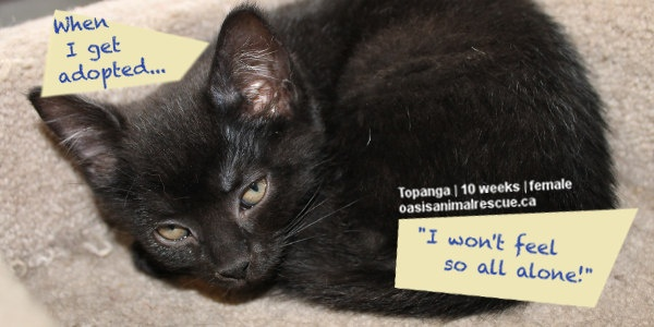 Sharing their hopes for the near future. oasisanimalrescue.ca