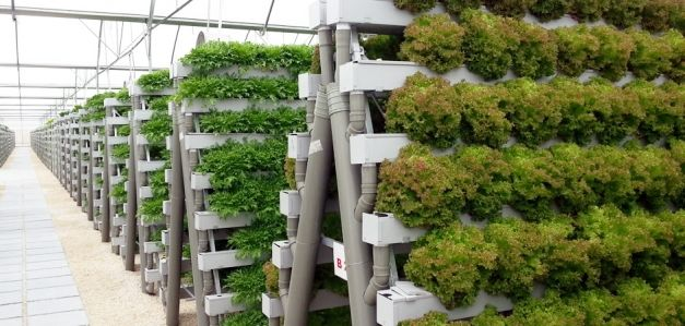 Hydroponics push to end food crisis – Pegasus Agriculture