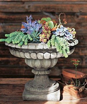 The colors and textures are amazing in these  Succulents   I'm still loving them...