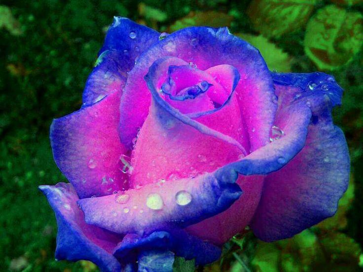 407 best pink blue images on pinterest beautiful things hint of blue flowers wallpaper id 1497536 desktop nexus nature mightylinksfo