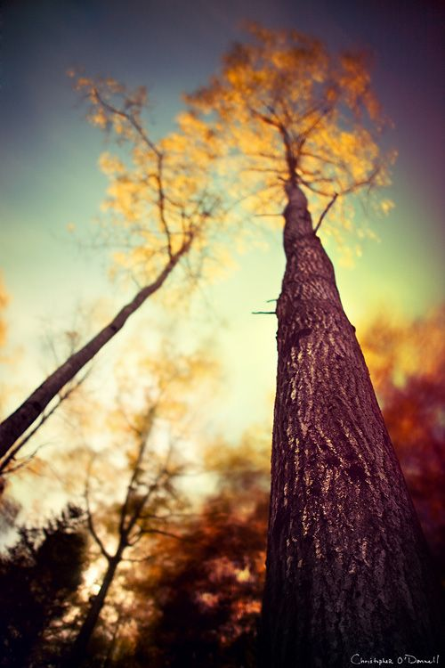 """Capturing Fall Foliage Post by """"The Photo Argus"""" who has fabulous photography tips! Check it out!"""