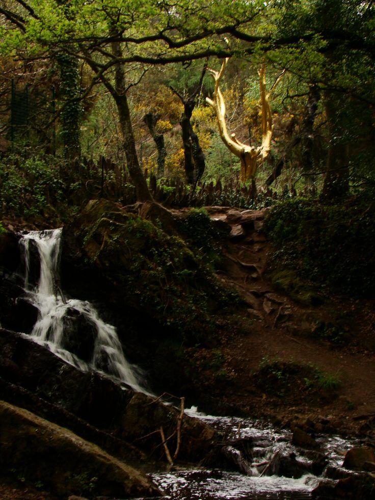 L'Arbre d'or, forêt de Paimpont, Brocéliande - The Golden Tree, Paimpont forest, Broceliande