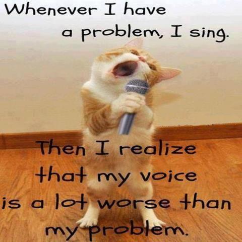 Funny cat saying