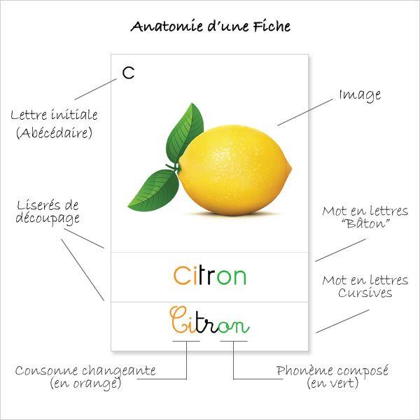 Fiches de nomenclatures vraiment magnifiques sur plusieurs thèmes tels les fruits et les légumes, l'astronomie, les poissons...